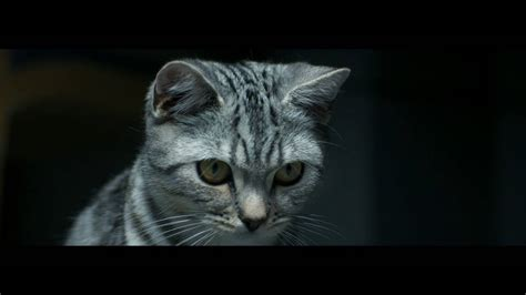Curious Cats - Brush - Whiskas TV ad - YouTube