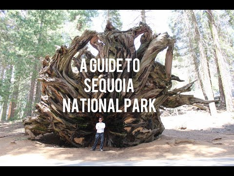 Giant Forest & Lodgepole Trails - Sequoia & Kings Canyon