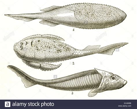Three kinds of armored fish from the Devonian Period