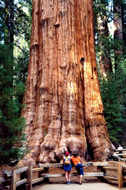 Sequoia and Kings Canyon National Parks – Travel guide at