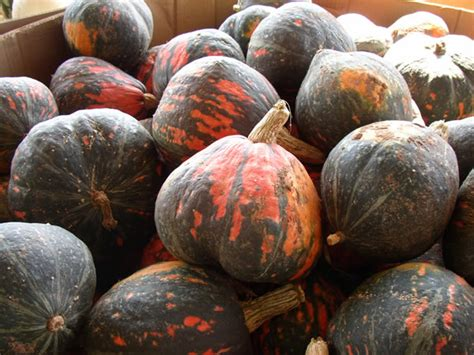 Get to Know These 11 Winter Squashes - Chowhound